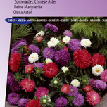 Aster Colour Carpet Mix (Zomeraster)