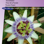 Passiebloem Passion Blue - Passiflora