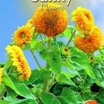 Sunny Flowers - Sungold