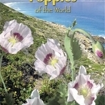 Poppies of the world - Papaver Blauwmaanzaad