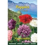 Poppies of the world - Papaver Pioenbloemig