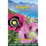 Poppies of the world - Papaver Slaapbol