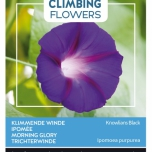 Flowering Climbers Ipomoea Knowlians Black