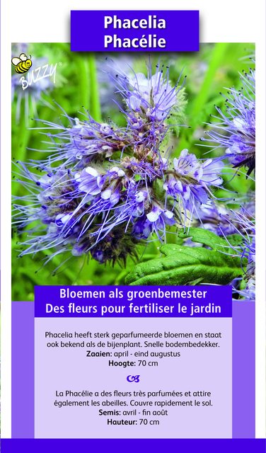 groenbemester phacelia 100gr 100 m2 kopen zaden. Black Bedroom Furniture Sets. Home Design Ideas