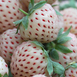 Aardbei White Pineberry (plantgoed)