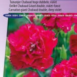 Anjer Magenta - Dianthus Chabaud