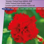 Anjer Etincellant Red - Dianthus Chabaud
