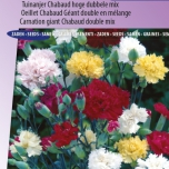 Anjer Chabaud Mix - Dianthus Chabaud