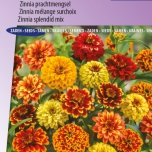 Zinnia Persian Carpet mix – Zinnia Haageana