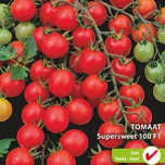 Tomaat Supersweet 100 F1 - Lycopersicon