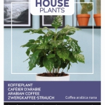 Coffea Arabica, Koffieplant - Buzzy House Plants
