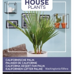 Californische Palm - Buzzy House Plants